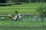 3907 - South India 2 weeks trip - 2 semaines en Inde du sud - IMG_2289_DxO WEB.jpg