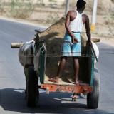 3909 - South India 2 weeks trip - 2 semaines en Inde du sud - IMG_2291_DxO WEB.jpg