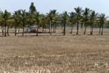 4002 - South India 2 weeks trip - 2 semaines en Inde du sud - IMG_2389_DxO WEB.jpg