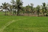 4011 - South India 2 weeks trip - 2 semaines en Inde du sud - IMG_2400_DxO WEB.jpg