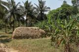 4012 - South India 2 weeks trip - 2 semaines en Inde du sud - IMG_2401_DxO WEB.jpg