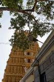 4198 - South India 2 weeks trip - 2 semaines en Inde du sud - IMG_2591_DxO WEB.jpg
