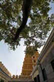 4201 - South India 2 weeks trip - 2 semaines en Inde du sud - IMG_2594_DxO WEB.jpg