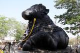 4232 - South India 2 weeks trip - 2 semaines en Inde du sud - IMG_2626_DxO WEB.jpg
