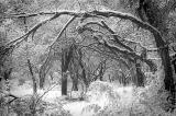 Rare snowfall Texas