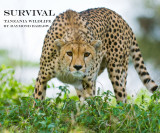 Cheetah - Book Cover Shot   Survival