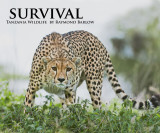 My latest book cover shot, Survival