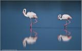Flamingos in Tanzania