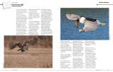 Master Craftsman Article page 5-6