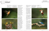 Master Craftsman Article page 3-4