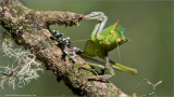 Costa Rica Bug
