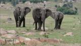 Elephant Family in Tanzania