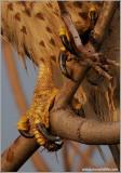 Talons close up 134