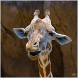Dallas Zoo 2012