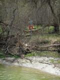 Visible Life Saving Equipment (Spring) Near Humber River, Toronto, Ontario