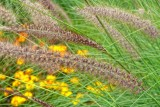 Grasses, At Brock's Monument, Queenston Heights