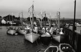 Scallop Boats, Digby, Nova Scotia