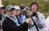 Julie with the Peregrine Falcon... educating the visitors!