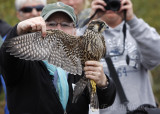 Julie with the Peregrine Falcon