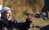 Andrew releasing Northern Shrike