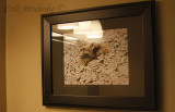 My Northern Saw-whet Owl photo, hanging up in the Alesche's Lodging near Sax-Zim!