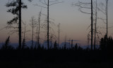 Sunset in Sax-Zim Bog