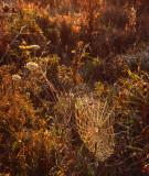 Spider web, Glacial Park