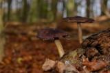 autumn in Poelbos