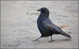 and the Crow said.....Walk this way.....