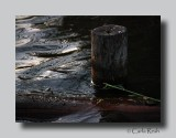 Water logged.....