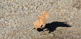Earth Shattering Leaf