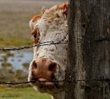 Peeking at you.....