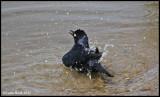 Bird Bath.....