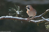 Vogels in Nunspeet