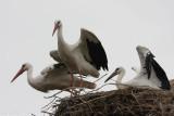 Vogels  in Natuurpark Lelystad