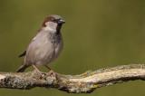 vogels in mijn achtertuin