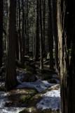 W-2011-02-09-0634- Yosemite -Photo Alain Trinckvel.jpg