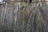 W-2011-02-09-1014- Yosemite -Photo Alain Trinckvel.jpg