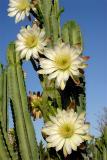 Blooms (DSC09590a.jpg)