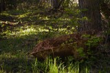 Wheelbarrow in the Woods 5_27_11.jpg