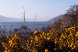 Yellow on Loch Ness