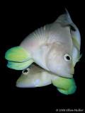 Bonaire Underwater-2006