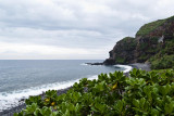 Greenery and Ocean