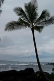 Hawaiian Vacation Day 5 - December 21st
