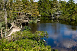 Gatorland Overlook
