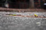 driveway flower