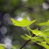 leaf @ f/1.4