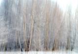 Dancing Into Winter