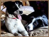FIRST DAY TOGETHER.  Drew's new little sister, Betty White.  8 months old.  She is an Aussie shepard/collie mix.