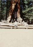 Sequoia Natl. Park